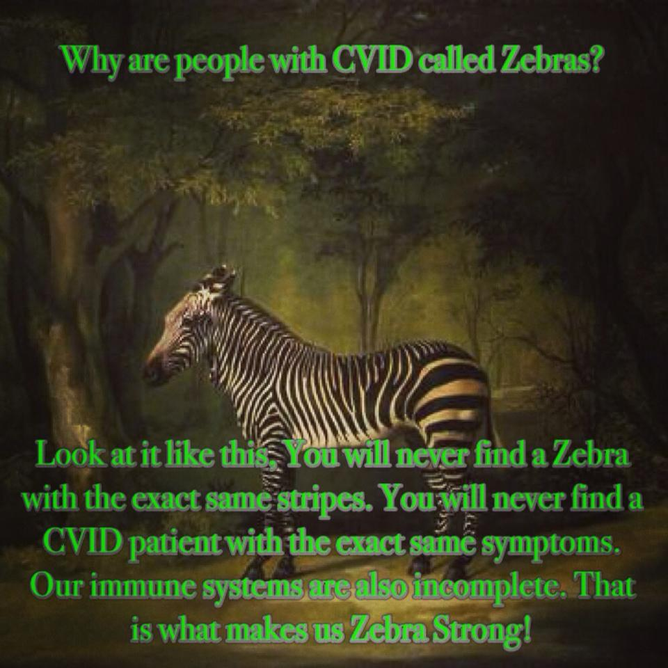 why cvid patients are called zebras  u2013 cvid awareness